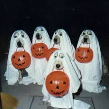 dogstrickortreat